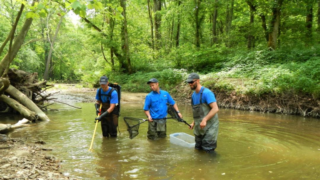 Fishery recruitment investigations